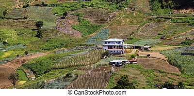 Rural scene at Sabah, Malaysia - Rural scene at a vegetable...
