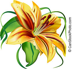 beautiful lily - beautiful flower, green leaves, yellow...