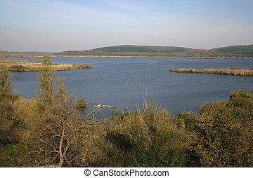 Lake Sreburnam, reedbed in Bulgaria