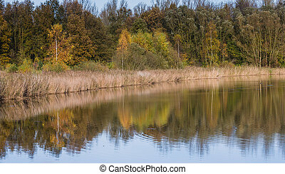 Lake with reflection of trees in the autumn
