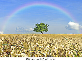 Cereal field with tree and rainbow