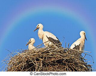 arco irirs, Cigüeñas, nido