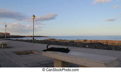 A lazy cat relaxing on a bench