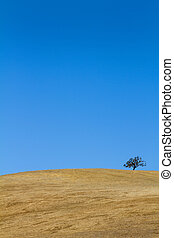 Tree On Barren Hillside - A lone tree grows on a barren...