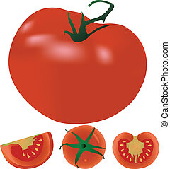 Tomatoes vector illustration
