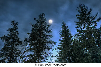 Pines at night in the woods. Moon night - Pines at night in...