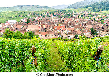 Village in Alsace - Vineyard and Village in Alsace at Summer