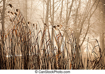 Cane and Morning Sunlight , Poland