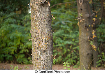 trunk of a tree in nature