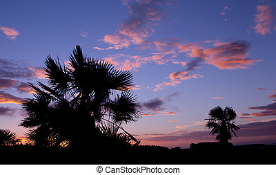 Cabbage Trees Sunset