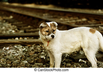 Stray dogs - The vagrant dog along the railway line
