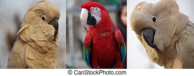 Awesome red macaw vs white moluccan - nice compilation of...