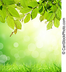 Floral background with free space for text - Hornbeam leaves...