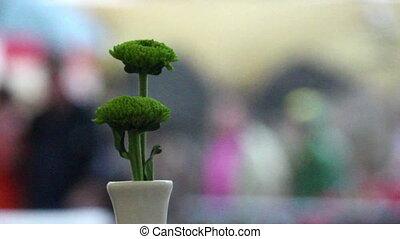 Green flower, rain, people