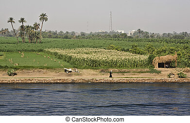 Nile peasants - Peasants at the banks of Nile river, Egypt