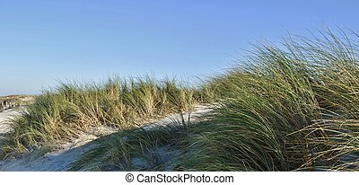 Dune Landscape - Dune landscape on the Big Bay beach Cape...