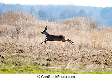 deer near old big forest in sunny day