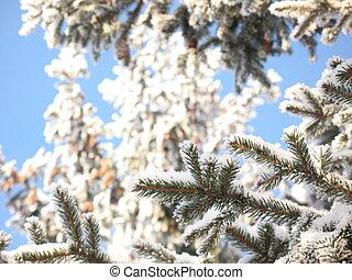 Snowy fir trees on a blue sky background