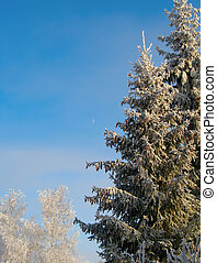 Winter trees under snow in sunny day