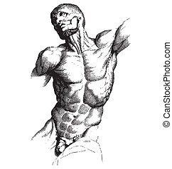 Male Torso Engraving - Ancient style engraving of a muscled...