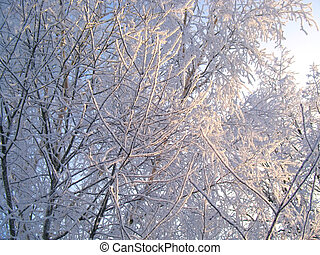 Winter trees under snow on a blue sky background