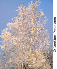 Winter tree under snow on a blue sky background