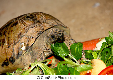 turtle eating fresh vegetables and fruits