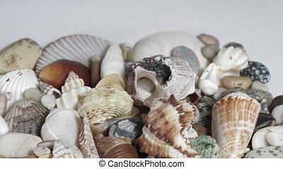 Seashells on white turning close up