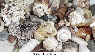 Mixed Seashells turning close up