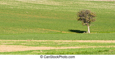 Rural Landscape - Lonely tree on a  green field