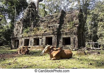 Preah Khan Building With Cow