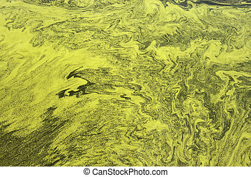 polluted water of Taihu lake - The polluted water of Taihu...