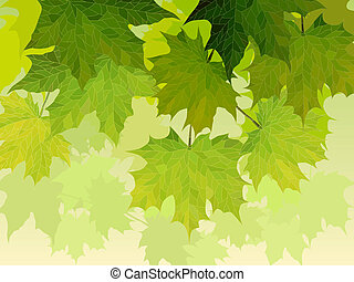 Crown of maple tree with leaves.