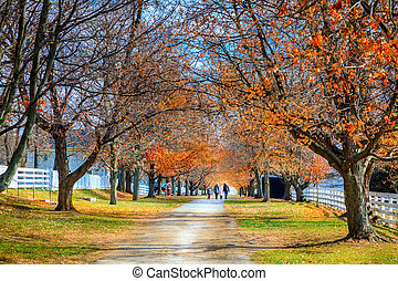 Walk in the park - A family is walking along the alley in...