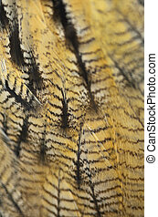 Eurasian Eagle Owl feathers - Closeup Eurasian Eagle Owl...