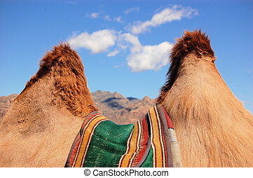 Camel Humps - Looking through the humps of a camel