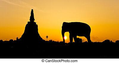 pagode, elefantes, Ayutthaya, tailandia