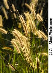 Flower grass impact sunlight