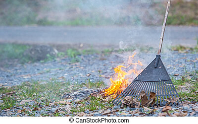 Burning Leaves - Raking and burning dried leaves in Malaysia