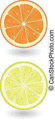 Lemon and Orange - Illustration of Lemon and Orange Cut