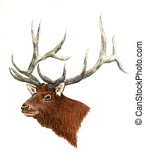 Elk - animals, wildlife, deer, elk, art, painting,...