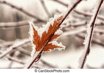 Hoar Frost on Leaf - Macro of autumn leaf covered hoar frost...