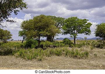 Mikumi National Park - The Mikumi National Park under the...