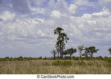 Mikumi National Park - The Mikumi National Park under the...