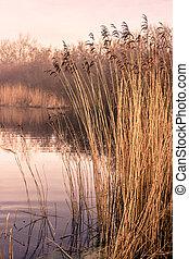 Idyllic lake - Small idyllic lake on a misty autumn morning