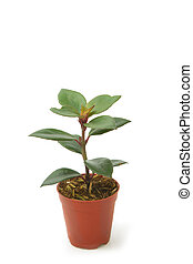 House Plant potted plant