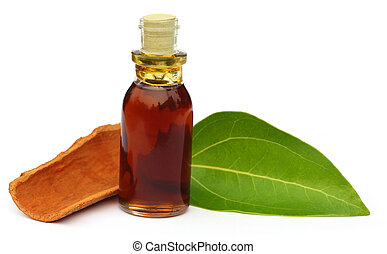 Cinnamon leaf with bark and essential oil over white...