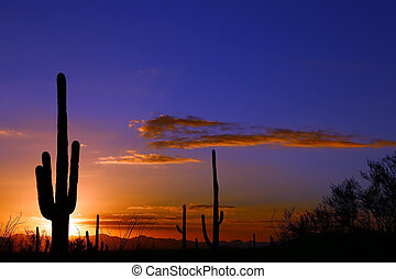 Cactus Sunset - Saguaro silhouetted by a desert sunset near...