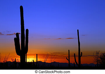 Desert Sunset - Saguaro silhouetted by a desert sunset near...