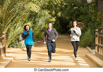 Joggers working out in a sunny palm tree park